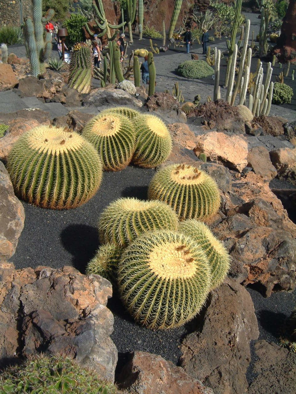 List of sights for Jardin de cactus lanzarote